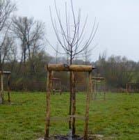 Bomen aanplanten en verplanten
