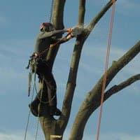 Bomen vellen demonteren afbreken